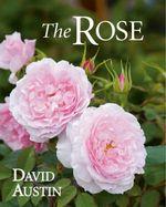 The Rose - David Austin