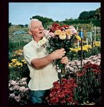 Allotments : The Expert Guide to a Productive Plot - Andrew Buurman