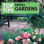 Top Tips for the Small Garden - Tom Petherick
