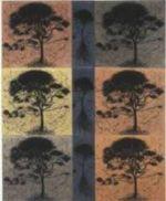 Hertha Kluge-Pott - Printmaker - Hilary Maddocks