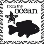 From the Ocean : From the Ocean - Jill Brailsford