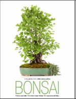 Bonsai - Anna Maria Botticelli