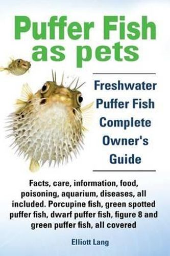 NEW Puffer Fish AS Pets Freshwater Puffer Fish Facts Care Information ...