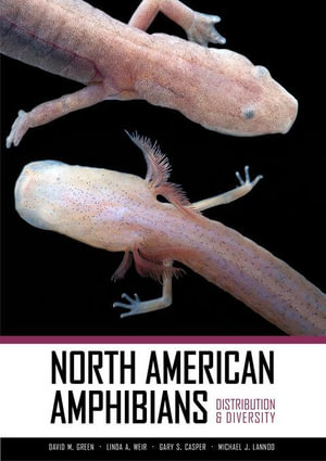 North American Amphibians : Distribution and Diversity - David M. Green