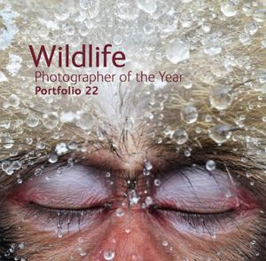 Wildlife Photographer of the Year  : Portfolio 22 - Rosamund Kidman Cox