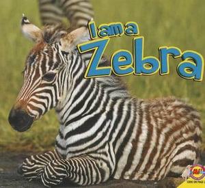 Zebra - Aaron Carr