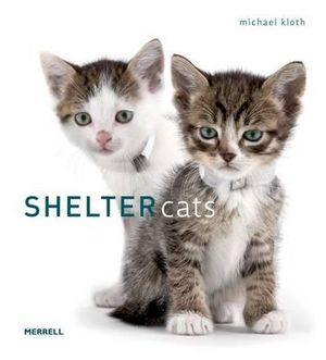 Shelter Cats - Michael Kloth