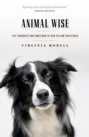 Animal Wise : The Thoughts and Emotions of Our Fellow Creatures - Virginia Morell